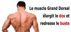 le muscle grand dorsal contribue à élargir le dos en forme de V