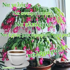 Good Night, Good Morning, Greek Quotes, Plants, Nighty Night, Buen Dia, Bonjour, Have A Good Night, Bom Dia