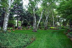 Conrad Art Glass & Gardens... birch walk