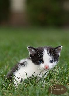 """""""A cat in grass is a tiger in the jungle."""" --English Proverb"""