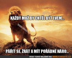 Každý muž by chtěl být lvem... Story Quotes, Motto, True Stories, Haha, Jokes, Funny, Movie Posters, Design, Quote