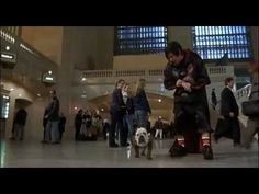 Little Nicky - Nicky meets Mr. Beefy and makes friends with crazy blind guy. Little Nicky, The Other Sister, Bulldog Names, S Youtube, Adam Sandler, S Stories, Horns, Wordpress, Presentation