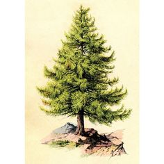 Vintage Clip Art Perfect Pine Tree ❤ liked on Polyvore featuring trees and christmas