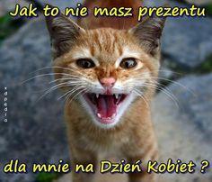 Znalezione obrazy dla zapytania koty śmieszne teksty