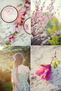 Pink Spring Blossom by loretoidas, via Flickr