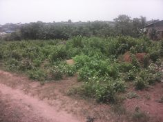 2 plots of prime lands at Otta, Ogun State.  #‎realestate‬ ‪#‎property‬ ‪#‎bungalow‬ ‪#‎forsale‬ ‪#‎Ota‬ ‪#‎Ogun‬ ‪#‎Nigeria‬