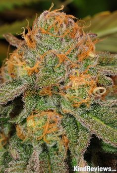 Onlinecannabisshop is a Fast, Friendly, Discrete, Reliable cannabis online dispensary which ships top grade bud around the world. Buy marijuana Online USA and Buy marijuana online UK or general Buying marijuana online has been distinguished by the superior quality of our products and by our overall focus on wellness and wide variety of marijuana strains for recreational use. Go to .... https://www.onlinecannabisshop.net  Text or call +1 (484) 706-9210
