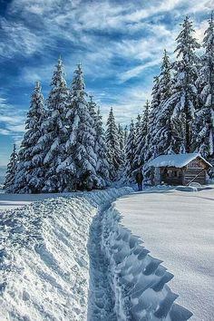 the same trees with snow.nice so nice SNOW nice snow Winter Forest, Winter Magic, Winter Love, Winter Snow, Winter White, Beautiful World, Beautiful Places, Beautiful Scenery, Wonderful Places