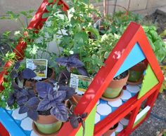 Upcycled container gardening