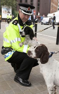 GMP has just concluded this years Operation Protector. The operation is put in place whenever a political party holds an annual conference in the city. Chief Superintendent John OHare takes tim Chien Springer, Springer Dog, Springer Spaniel Puppies, English Springer Spaniel, Spaniel Dog, Black Lab Puppies, Dogs And Puppies, Corgi Puppies, Doggies