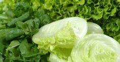 Conservação de Folhas de Salada