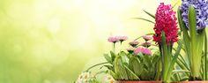 Dicas Simples que Ajudam a Manter a Saúde das Plantas - Toda planta está sujeita à ação de insetos, ácaros e fungos fitopatogênicos, agentes que podem ser bastante prejudiciais. Embora o ataque de pragas seja um processo natural, isso pode ser intensificado e tornar-se um grave problema dependendo das condições de cultivo.    Plantas saudáveis   C... - http://aduboquimico.com/ecoblog/2014/10/02/dicas-simples-que-ajudam-a-manter-a-saude-das-plantas/