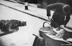 City meat man feeds cats at the beginning of 1939 http://www.bbc.com/news/magazine-24478532