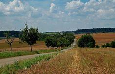 Abgeerntet sind die Felder, ... es färben sich auch bald die Wälder, heiße Tage sind zerronnen, Weinlese hat schon begonnen, Nebel wabert in der Früh, auf der Weide keine Küh, Spinnenfäden, erst ein, dann zwei, dann drei, ich glaub der Sommer ist vorbei. :-)