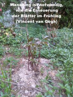 Wandlung ist notwendig, wie die Erneuerung der Blätter im Frühling (Vincent van Gogh) Vincent Van Gogh, Plants, Mathematical Analysis, Happy Life, World, Quotes, Plant, Planets