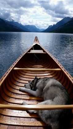 Undeniable Reasons to Own a Siberian Husky Ideas. Irrefutable Reasons to Own a Siberian Husky Ideas. Love My Dog, Canoa Kayak, Animals And Pets, Cute Animals, Pet Travel, Travel Hacks, Travel Ideas, Travel Tips, Mans Best Friend