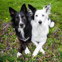 A best friend is someone who loves you when you forget to love yourself.  #dog #dogs #doggy #doggie #puppy #dogsofinstagram #dogstagram #dogstargram #instadog #doglove #lovedogs #ilovemydog #doglovers #pet #petty #petlove #petsofinstagram #instapet #petcare #dogcare #petloversofinstagram #dogloversofinstagram #ilovemypet #inspiration #dogsoftheday #petlovers #picoftheday #photooftheday #bordercollie