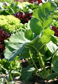 Gartentipps: Gemüse-Frühjahreskulturen im Kleingewächshaus