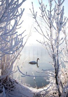 Winter Swan by E.Winter Swan - ©E. van Nuil (via FineArtAmerica) Winter Szenen, I Love Winter, Winter Magic, Winter Time, Winter Christmas, Maine Winter, Winter Season, Royal Christmas, Prim Christmas