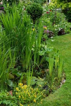 Mini garden pond Bug Hotel, Insect Hotel, Summer Flowers, Colorful Flowers, Crocosmia, Herbaceous Border, Plant Supports, Stone Path, Low Maintenance Garden