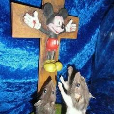 Do you have a moment to talk about our lord and saviour Mickey Mouse? Best Memes, Dankest Memes, Meme Gifs, Vape Memes, Mickey Mouse, Meme Page, Memes In Real Life, No Kidding, Humor Grafico