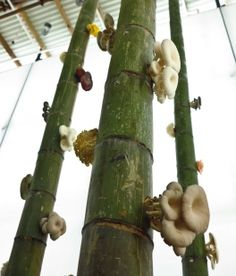 VISI / GardenDesign for good   South African designer Stephen Lamb wowed audiences in Shanghai with his magical upside-down mushroom forest, and is now back in Cape Town to try his low-cost growing concept on home turf.