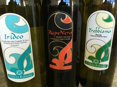 Wines of Le Marche