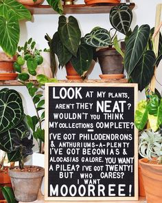Just when I think I'm done collecting I see lots more gadgets, gizmos, whosits, whatsits, and thingamabobs to add 🧜🏼♀️ Planting Succulents, Garden Plants, Indoor Plants, Planting Flowers, Indoor Garden, Felt Letter Board, Felt Letters, Asmr, Plants Quotes
