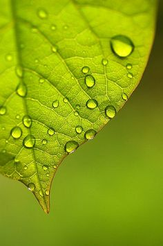 Green Leaf and Droplets by *suika * http://calgary.isgreen.ca/