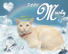 #Musty (@MustardSupercat) Candlepage: http://www.gratefulness.org/candles/candles.cfm?l=eng&gi=Musty