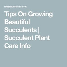 Tips On Growing Beautiful Succulents | Succulent Plant Care Info