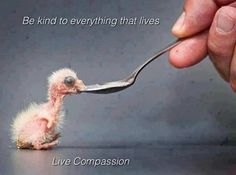 Be Kind ~ Live Compassion ⊰♡⊱