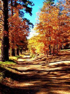 Fall leaves - Mt. Laguna, CA