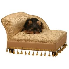 For this great price, the Fantasy Furniture Mini Chaise Elegant Gold Pet Bed comes widely recommended and is a popular choice amongst most people. Fantasy Furniture - Pets have included some great touches and this equals good value. Dog Sofa Bed, Sofa Beds, Dog Day Afternoon, Designer Dog Beds, Dog Beds For Small Dogs, Large Dogs, Dog Furniture, Steel Furniture, Furniture Projects