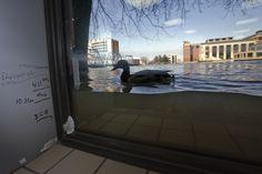 Наводнение в районе Великих Озер, США. Штаты Мичиган (город Гран-Рапидс) и Иллинойс (деревня Фокс-Лейк), США.