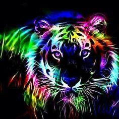 Beautiful rainbow tiger