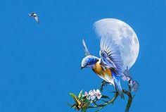 Kolibris, Kolibri, Mond, Vögel, Möwe
