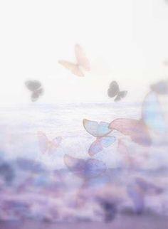 soft lavender butterflies.