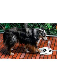 ❤ Spaniel Perro encantos 3D ❤ Pack de 5 ❤ ❤ de manualidades//fabricación de joyas