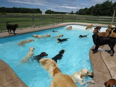 This puppy pool party was the cutest event of the summer. | The 50 Cutest Things That Happened This Year