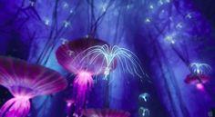 """_Tokirina: Sementes da árvore sagrada, são considerados pelos Na'Vi espiritos muito puros e também podem ser vistos como um sinal.Uma espécie menor e mais mansa é o Woodsprite, semelhante a uma medusa, que ondula seus brotos sedosos, deslocando-se graciosamente no ar da noite. Chamado de tokirina pelos Na'vi, na verdade são sementes da sagrada """"Árvore das Vozes"""" Utraya Mokri, e parcela importante da """"alma"""" da florest"""