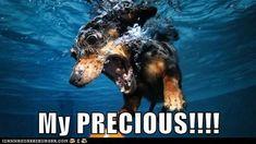 I Has A Hotdog - dachshund - Loldogs n Cute Puppies - funny dog pictures - Cheezburger