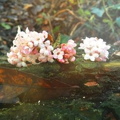 【flowertopia_london】さんのInstagramをピンしています。 《We were walking in the woodland yesterday where my little girl attends her forest school when we saw these little flowers fallen from a tree that looks very much like cherry blossoms to me. This erratic weather of sun-snow-rain has given these flowers a burst of life. Ever since my little girl came into my life, my love of nature and attention to its detail has intensified. Flowertopia London was inspired by our love of nature, all of its elements…