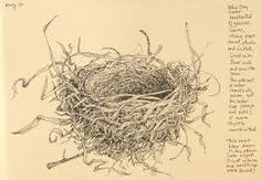 Image result for blue jay antique drawings