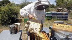 Resuelve el problema matemático de las abejas