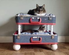 suitcase cat bunkbeds