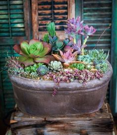 Simply Succulent Plant Designs- Los Angeles, Orange County - Large, Yard Rehab