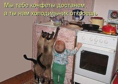 Kids and cats Funny Cats And Dogs, Kittens And Puppies, Funny Animals, Cute Animals, Neko, Cat Empire, Cat Brain, Cat In Heat, Cat Vs Dog