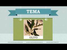 Beneficios, nutrientes y propiedades del olivo. Más información en: http://www.remediocaseronatural.com/comidas-sanas-beneficios-olivo.htm