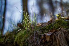https://flic.kr/p/FUQ666 | Tavasz...én így szeretlek! | Zemplén hegység kincsei...
